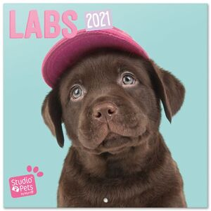 CALENDARIO PARED 30X30 STUDIO PETS LABS 2021